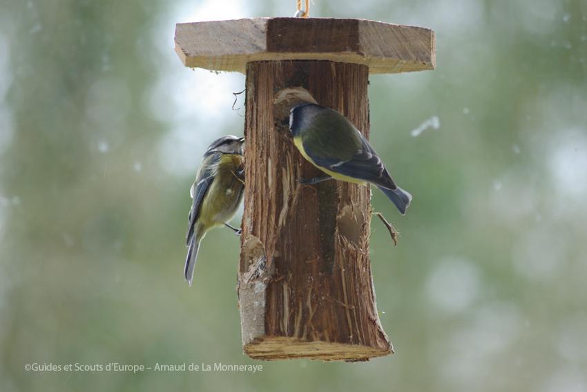 mangeoire 2 oiseaux
