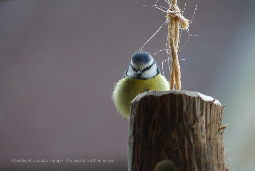 oiseau sur mangeoire